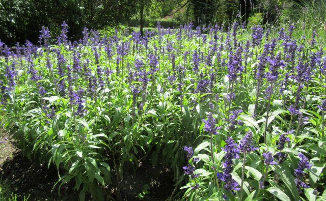 Delo na vrtu je zelo pomembno za psihično zdravje, hrana, pridelana na lastnem vrtu, je vedno sveža in tudi zato najprimernejša za naše fizično zdravje, razmišlja Miša Pušenjak, svetovalka, specialistka za zelenjadarstvo in okrasne rastline na KGZS Zavod Maribor.<br /> <br /> Foto: Špela Kuralt