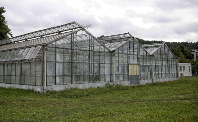 Rastlinjaki za sredozemske rastline na Večni poti bodo kmalu porušeni. FOTO: Blaž Samec/Delo