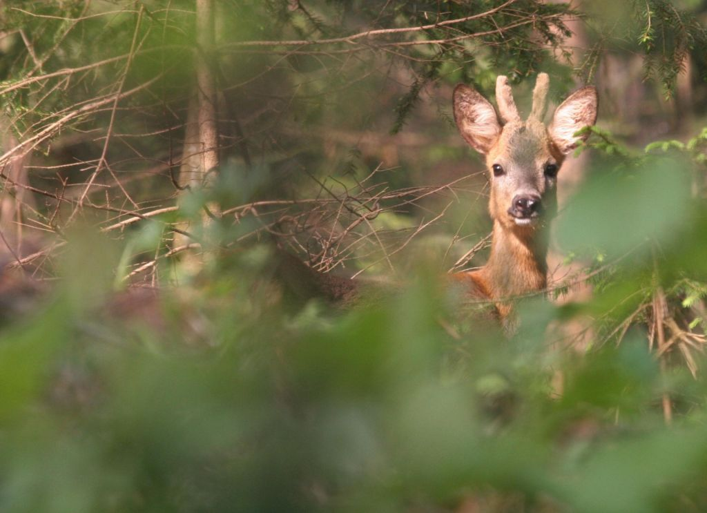 Kaj se skriva v Javorniških gozdovih?