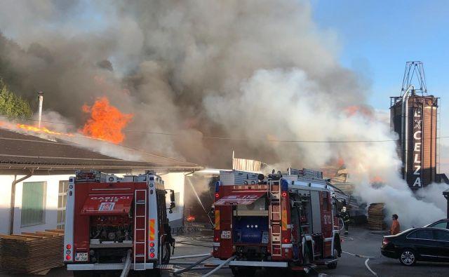 Z ognjem se je borilo več kot sto gasilcev. FOTO: PU Koper