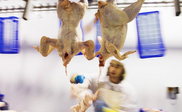 Bomo premogli dovolj pameti in prepoznali bolezen v našem ekonomskem modelu, tudi v verigi preskrbe s hrano, ter zanjo našli pravo zdravilo? FOTO: Felix Ordonez Ausin/Reuters Pictures
