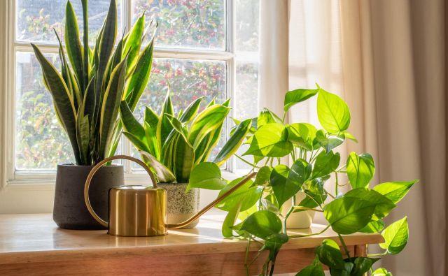 Čeprav okrasne rastline popestrijo prostore in vanje vnesejo življenje, so nekatere lahko otrokom in hišnim ljubljenčkom nevarne. FOTO: Grumpy Cow Studios/Shutterstock