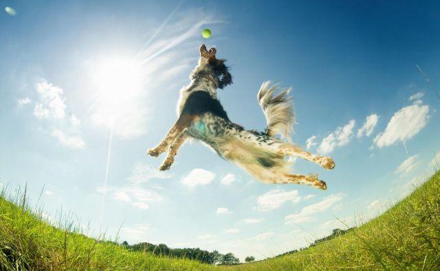 Čeprav je odvisno od psa, kako bo kakšno dejanje razumel, je pomembno, vztrajajo avtorji raziskave, da lastniki v obzir vzamejo čustva svojega ljubljenčka. Foto Shevs/Shutterstock