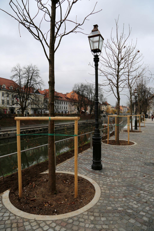 Črna usoda za divje kostanje v Ljubljani – in Sloveniji