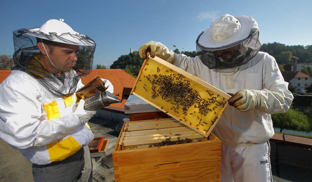 Slovenija, svetovna čebelarska sila