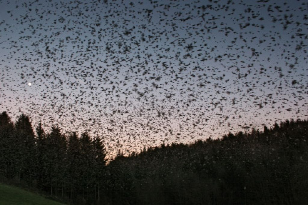 Krivci za pogine ptic so vreme, bolezni, človek ...