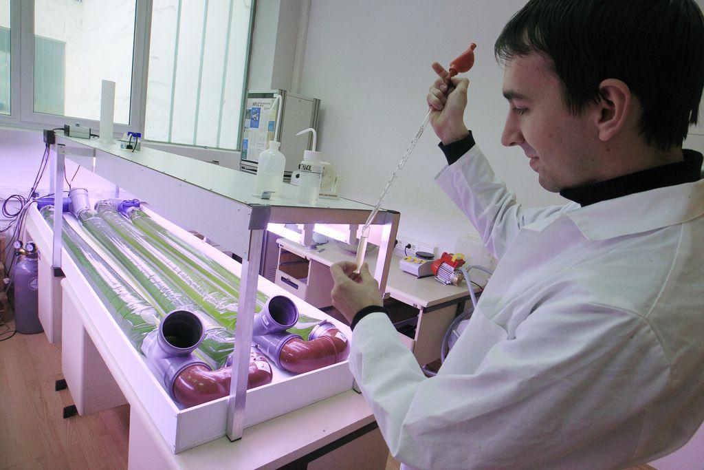 Tudi proizvodnja biogoriv iz alg bo postala donosna