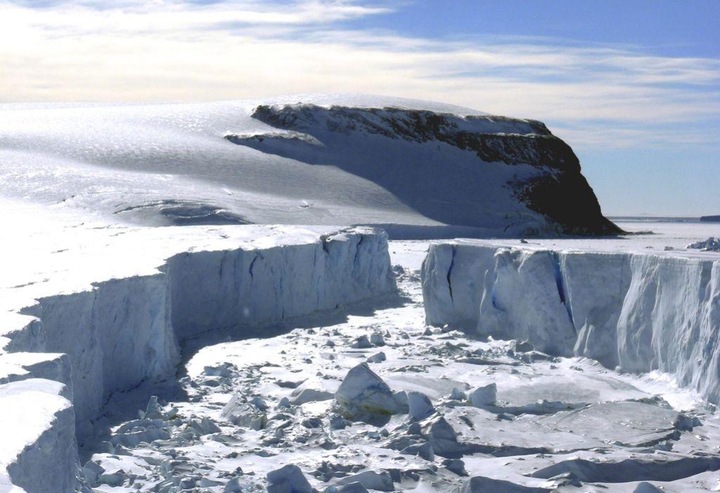 Na Antarktiki nekoč rastel tropski gozd