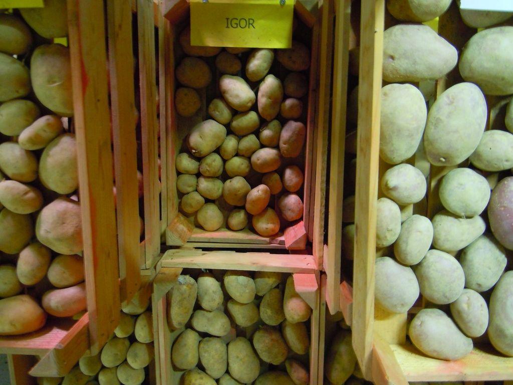 Krompir na vse načine, samo da je pražen