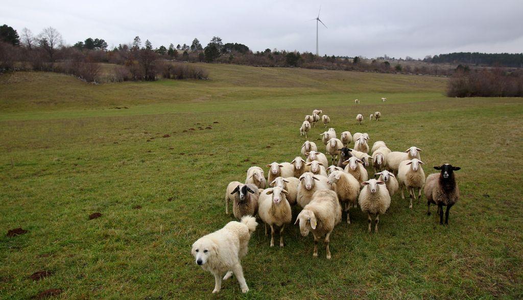 Podeželje ni samo kmetijstvo