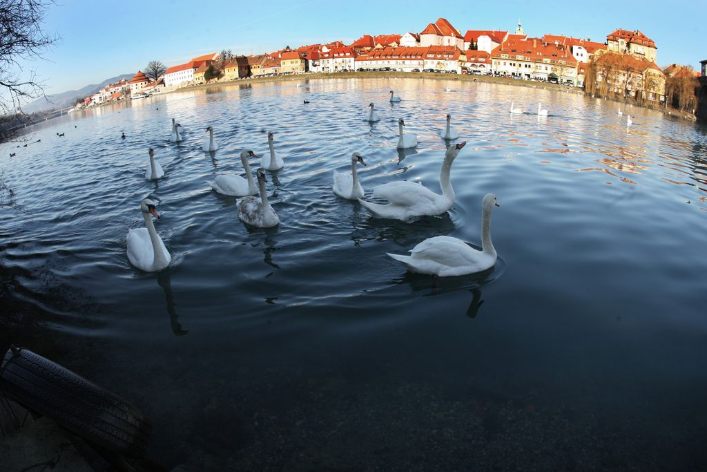 Dobro jutro: Maribor