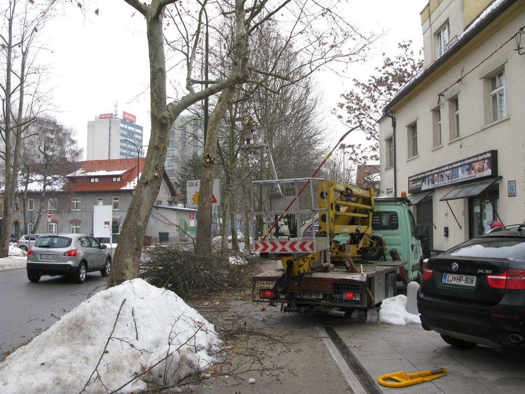 Zimsko (prisilno) obrezovanje dreves