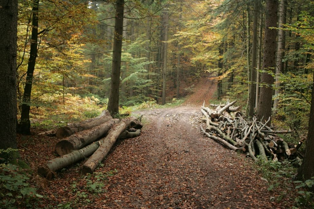 Gozdovi so slovenska nafta