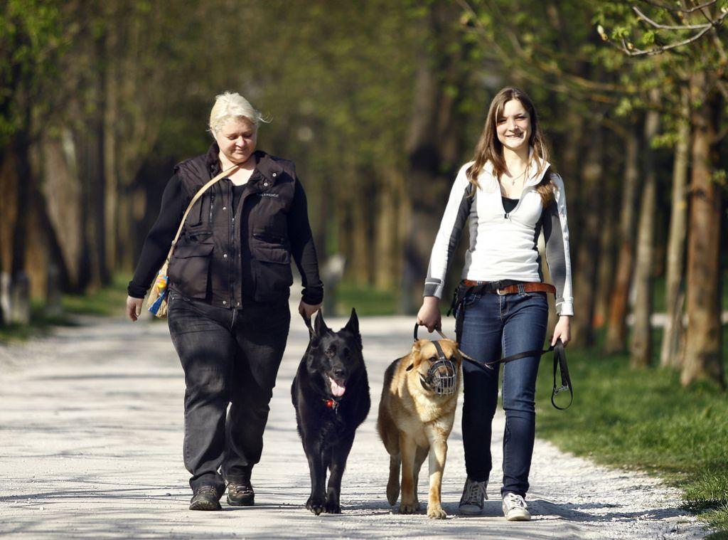 Šola za problematične pse (in lastnike)