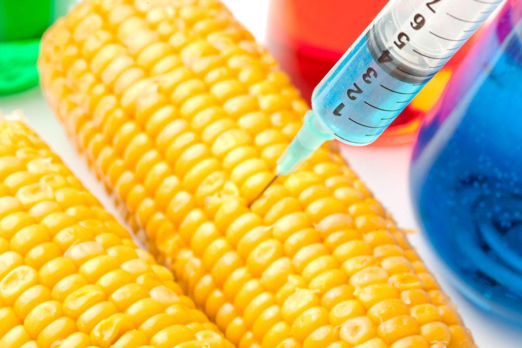Slovenija lahko omeji ali prepove pridelavo GSO