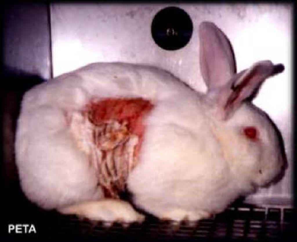 Poskusi na živalih: nasprotuje jim milijon Evropejcev