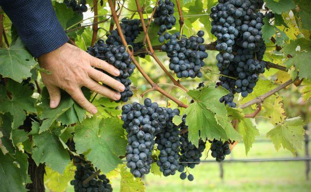 Italijanska vinska zadruga Vivai Cooperativi iz Rauscenda 14.oktobra 2013.