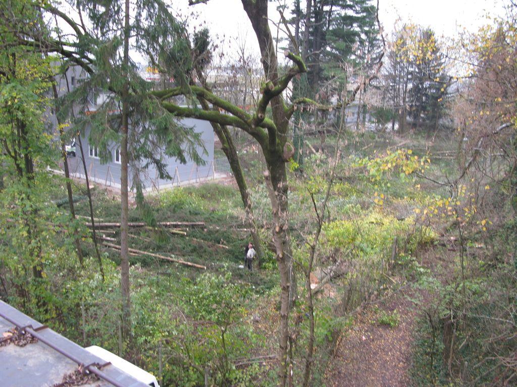 Izsekali bodo gozd, ki formalno ne obstaja