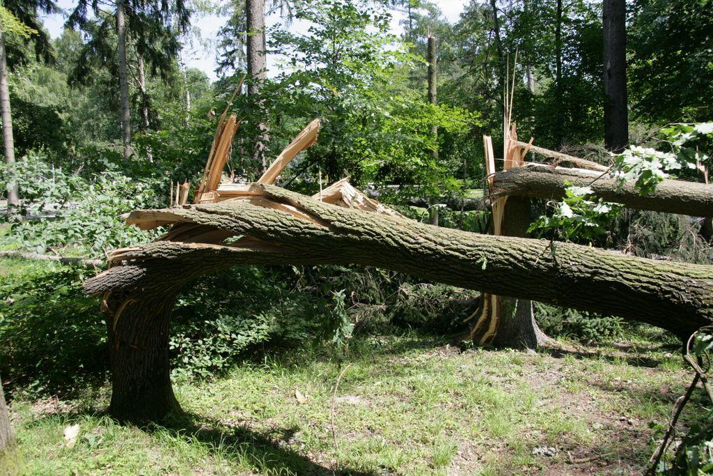 Vetrolom v gozdovih povzročil za približno pet milijonov škode
