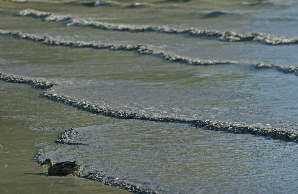 Začenja se usposabljanje za čiščenje morske obale