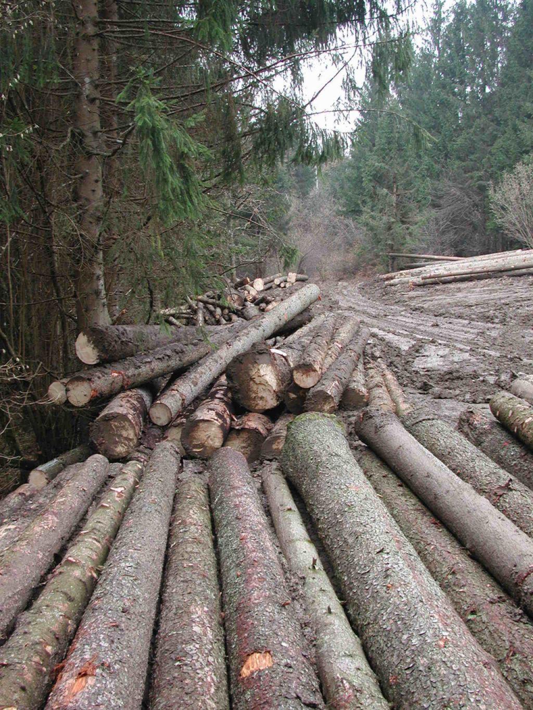 Sanacija nujna kar za polovico vseh gozdov