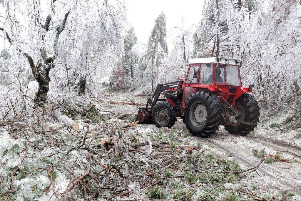 Katastrofa v gozdovih