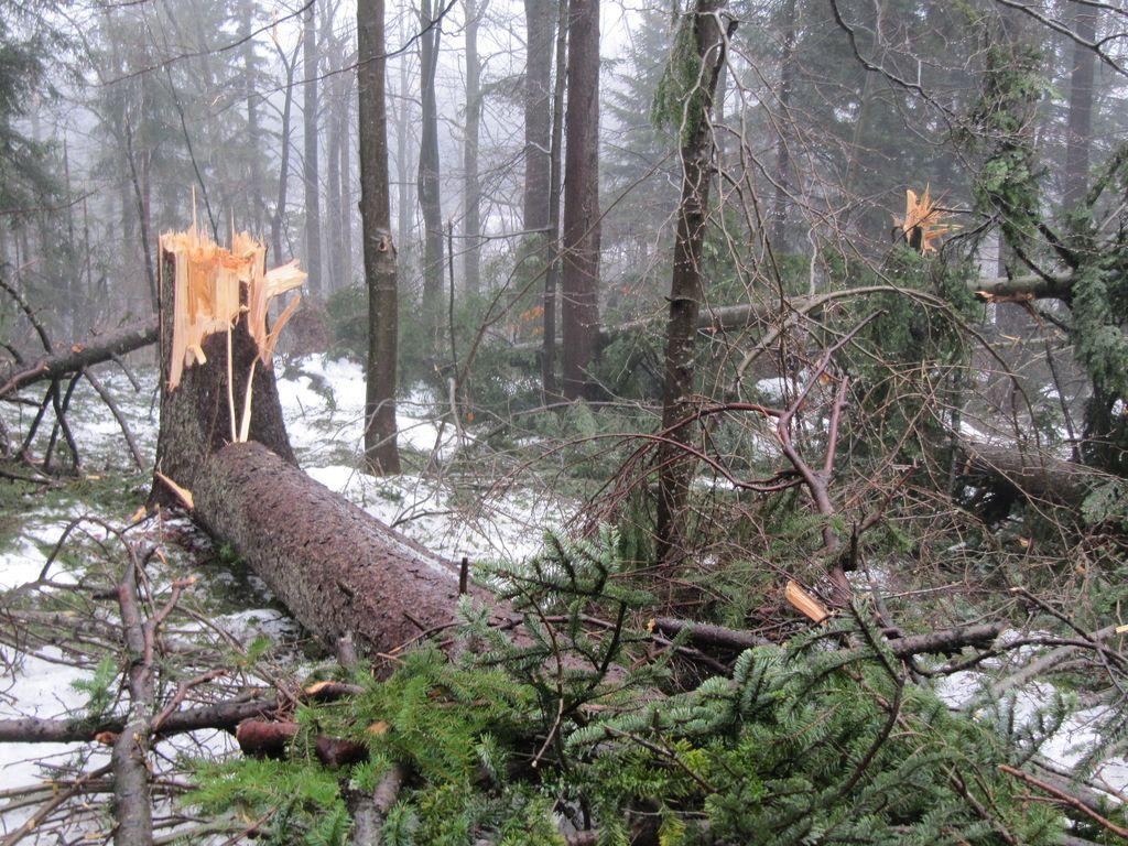 Skoraj polovica planinskih poti poškodovana ali neprehodna