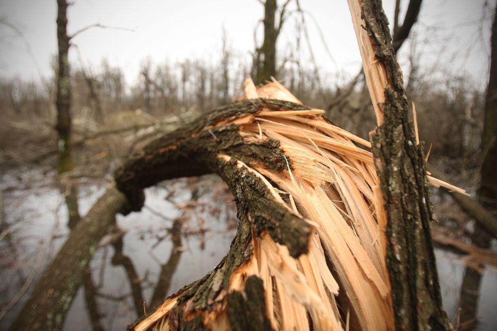 Na poškodovanih območjih zbirni centri lesa