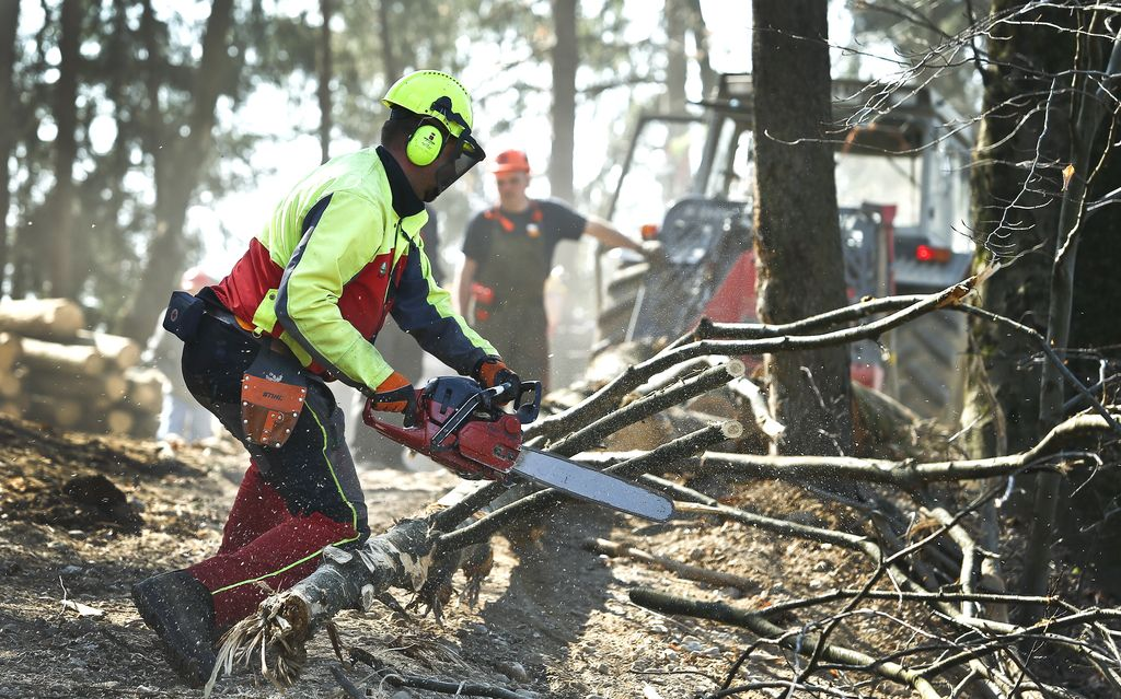 Lubadar že priganja k spravilu poškodovanega drevja