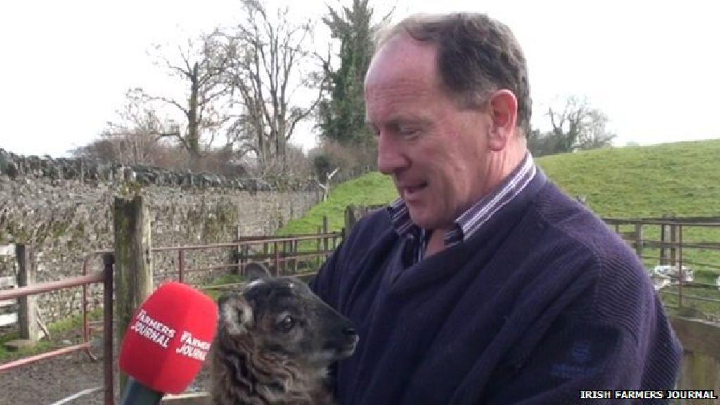 Rezultat nenačrtnega parjenja ovce in koze je ...