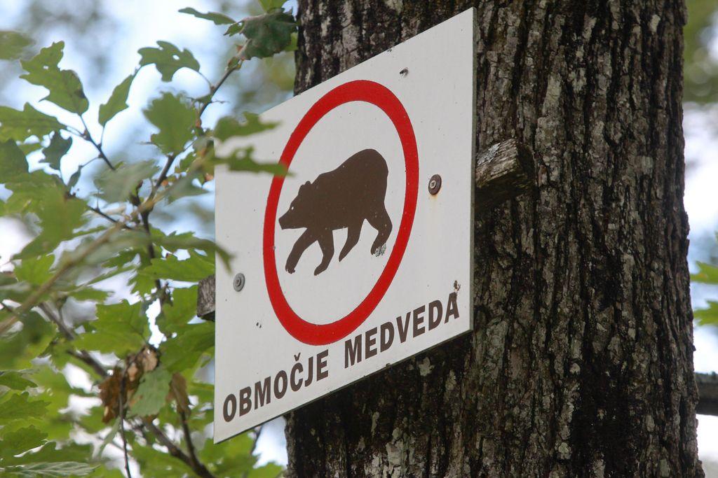 Za odstrel 83 medvedov in pet volkov