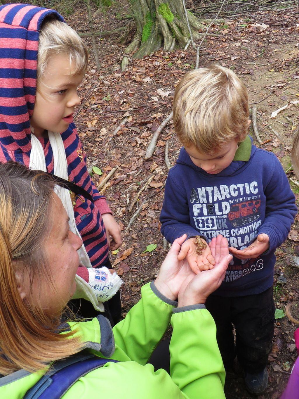 Gozdni vrtec: V varstvu pri škratih in dobrih vilah