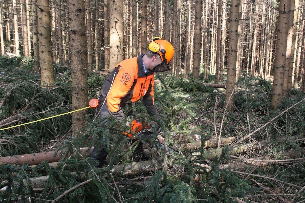 Gozdarji prehitevajo lastne sanacijske načrte