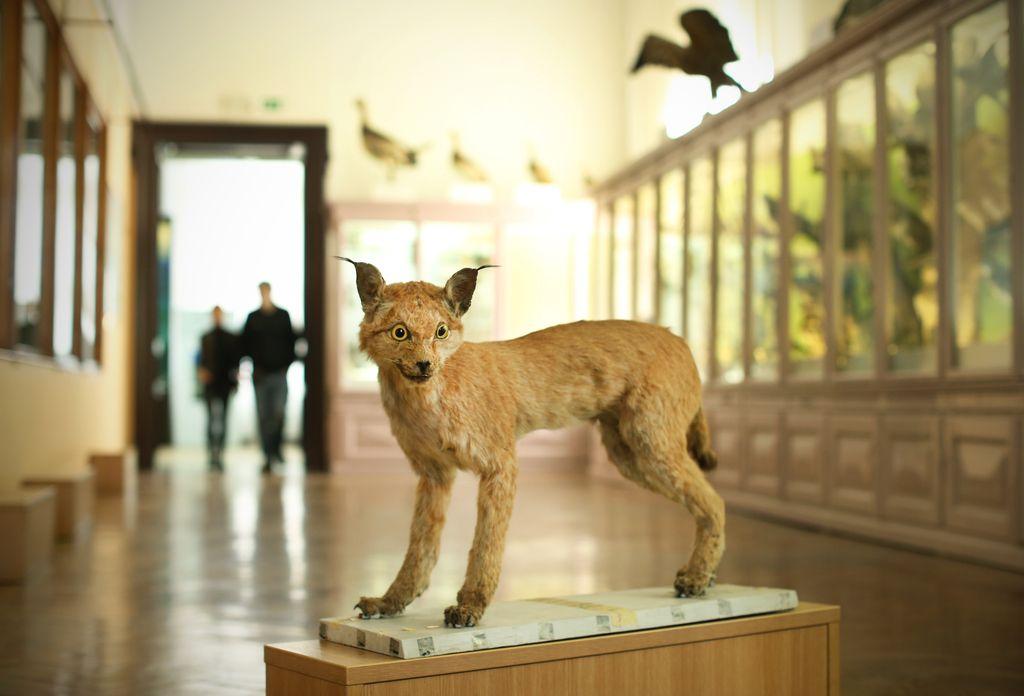 Zoolog, botanik, kartograf – pravi frajer