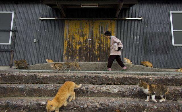 JAPAN-CATS/