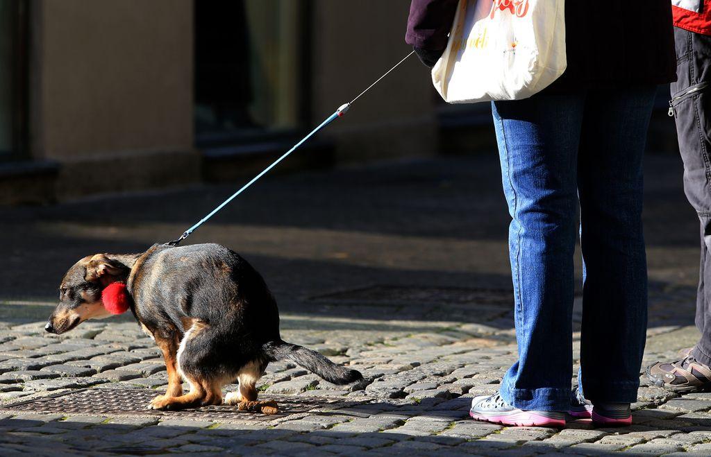 Da bi se izognil aretaciji, se je povaljal v pasjih iztrebkih