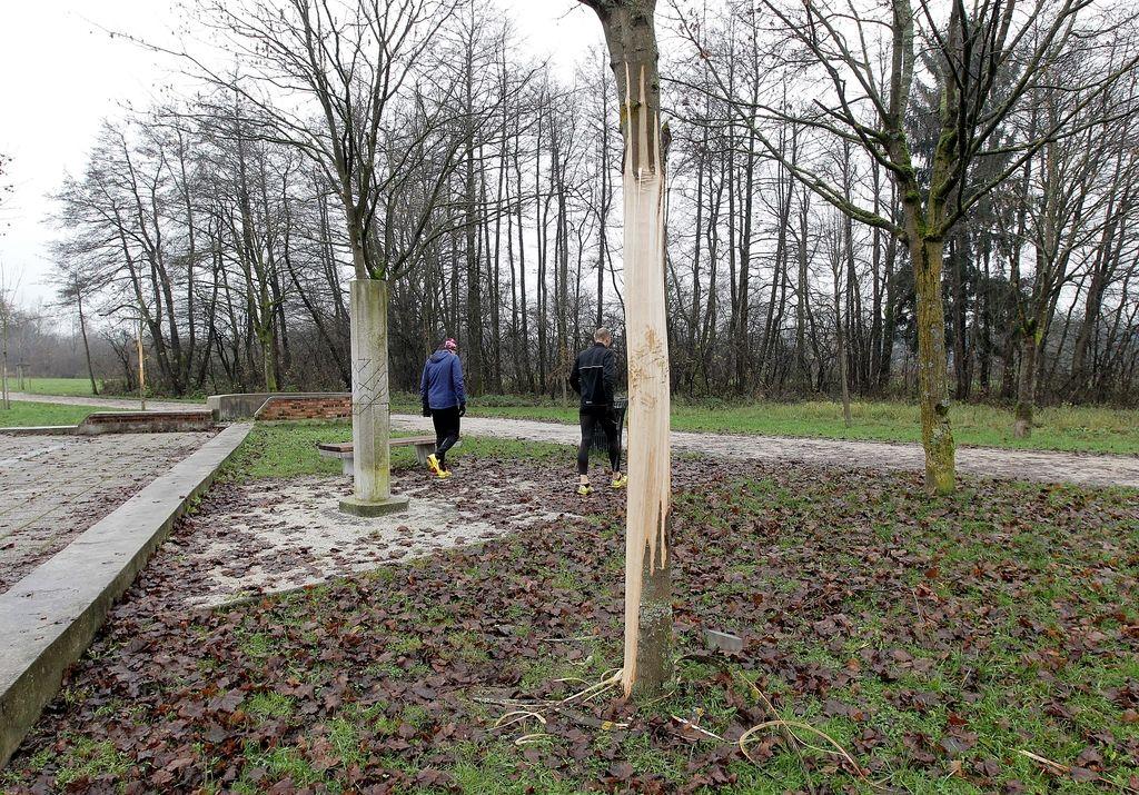 Drevesa v MOL zaščitili s tisočevrskimi globami