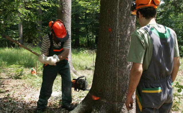 Slovenija, Medvode, 27.06. 2005 - V okolici Medvod so gozdarji začeli s sečnjo smrek, ki jih je napadel lubadar. foto: Blaž Samec/ DELO