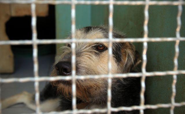 Pasje zavetišče Dvori nad Koprom 10.06 2015