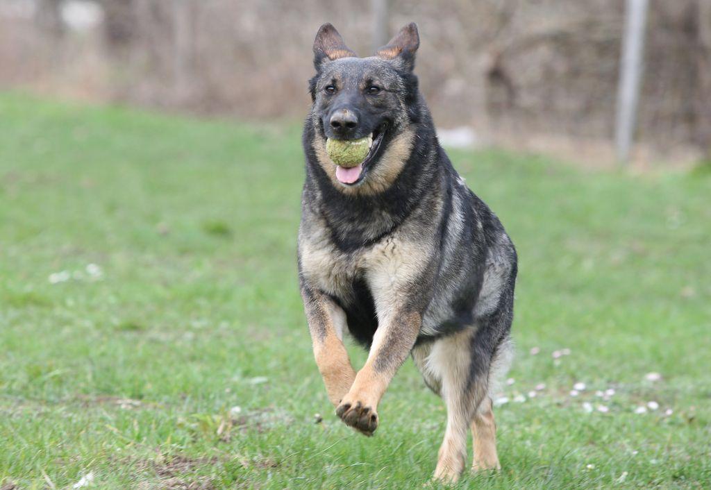 Kolumna bralke: Vpliv urjenja psov na rehabilitacijo zapornikov