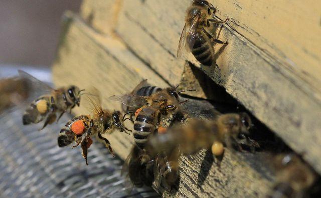 Čebelarstvo na Igu, 8. marca 2014