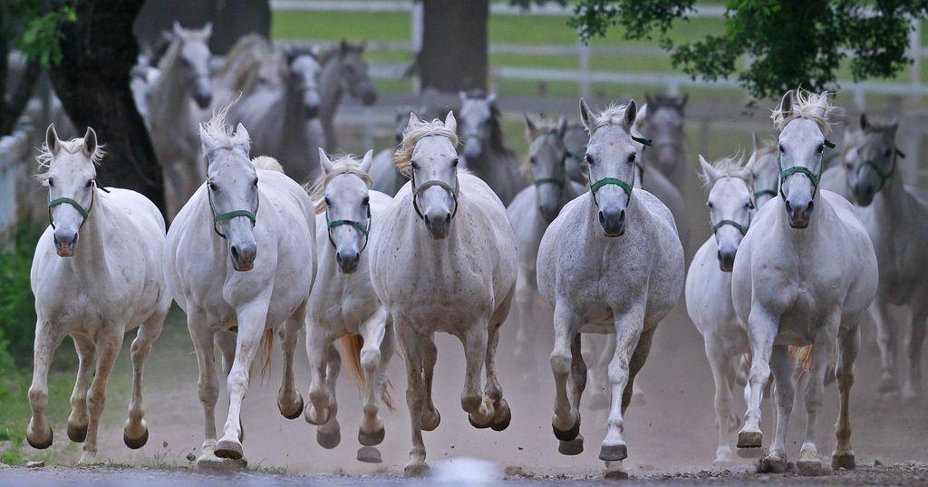 Loreli Dobrinja polni mandat za vodenje Kobilarne Lipica