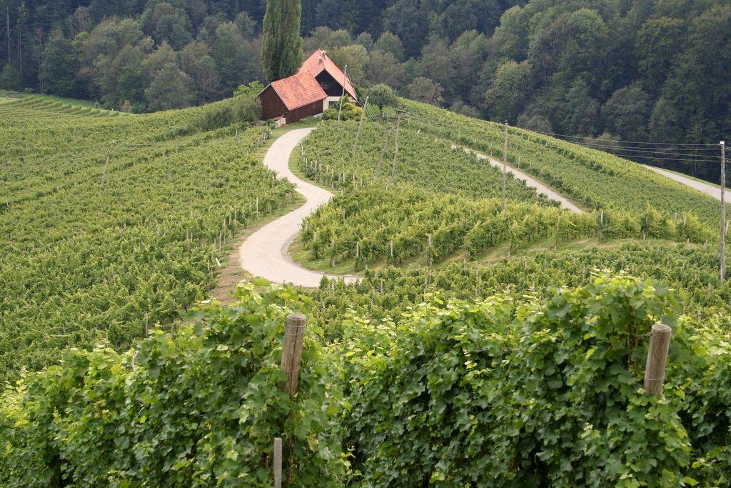 Streznitev po zaljubljenosti v lastna vina