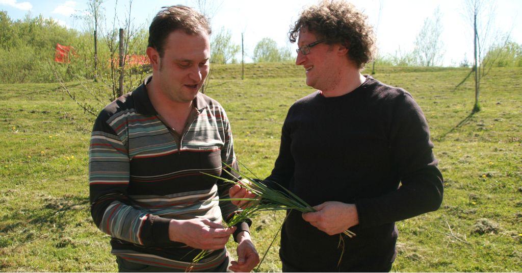 Slovenska pšenica, ki obeta 30 odstotkov višji pridelek