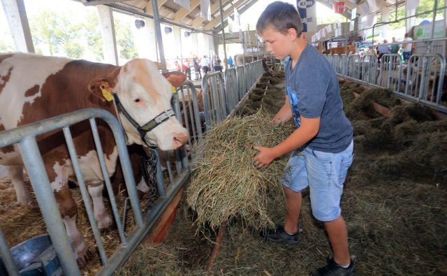 Kmetijsko živilski AGRA, 24.8.2015, Gornja Radgona [AGRA, kmetijsko živilski sejem, Gornja Radgona]
