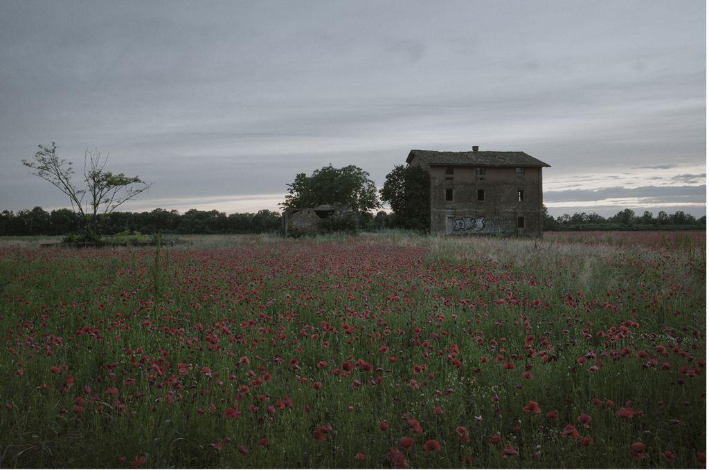 Ocenjujemo: Polja rdečega maka; Velika vojna v odsevu sodobne fotografije