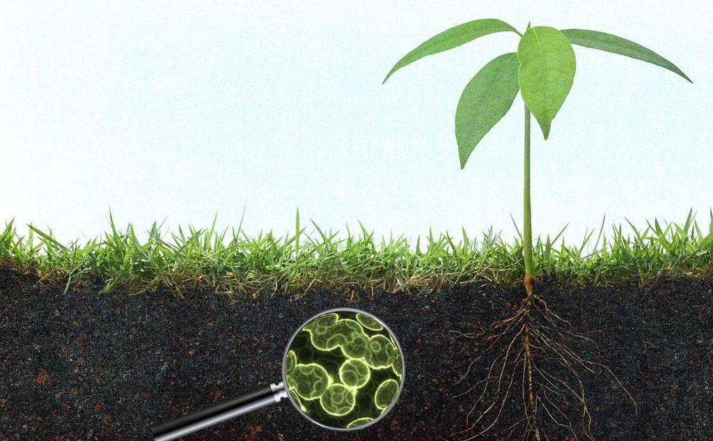 Z mikrobi do večjih rastlin