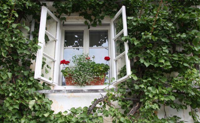 ankele/okno