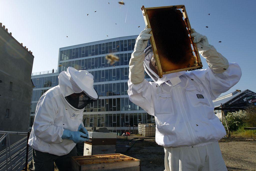 Urbanega čebelarstva niso izumili hipsterji