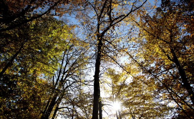 Jesenski gozd in sonce,Ljubljana Slovenija 04.11..2015 [Jesen,narava,gozd,listje]